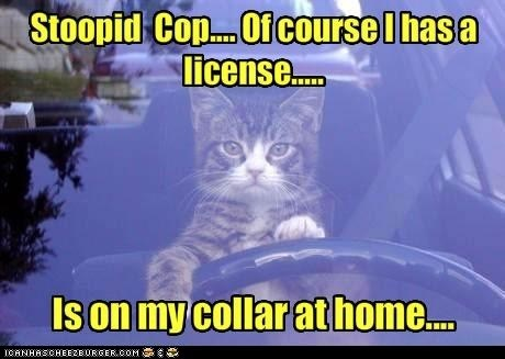 Picture of a cat taken through the windshield of a car. Cat is at the steering wheel. Words: Stooopid cop... of course I has a license... Is on my collar at home...