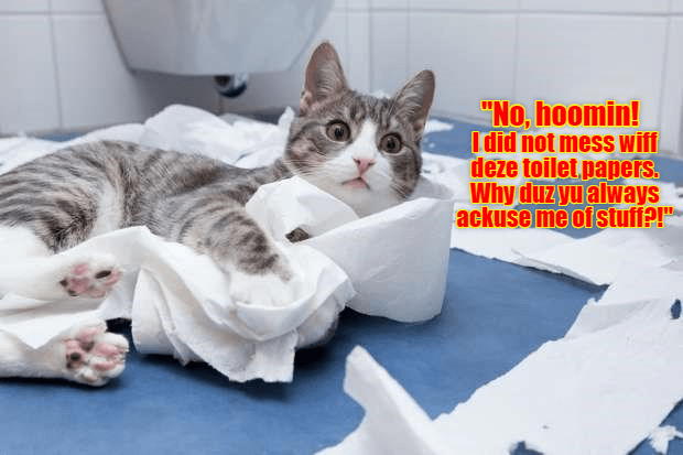 "Picture of a cat tangled in toilet paper with the words ""No hoomin! I did not mess wiff deze toilet papers. Why duz yu always ackuse me of stuff?!"" (misspellings are on purpose)"