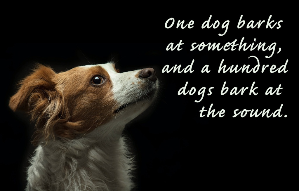 Picture of a dog with the words: One dog barks at something, and a hundred dogs bark at the sound.