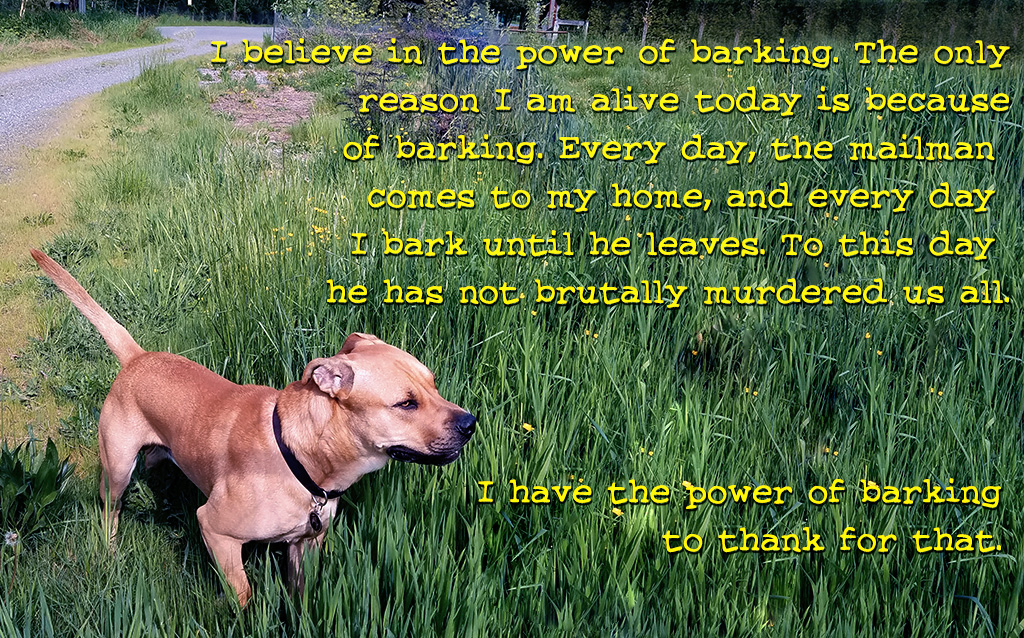 Picture of a dog in a field with the words: I believe in the power of barking. The only reason I'm alive today is because of barking. Every day the mailman comes to my house and I bark until he leaves. To this day, he has not brutally murdered us all. I have barking to thank for that.